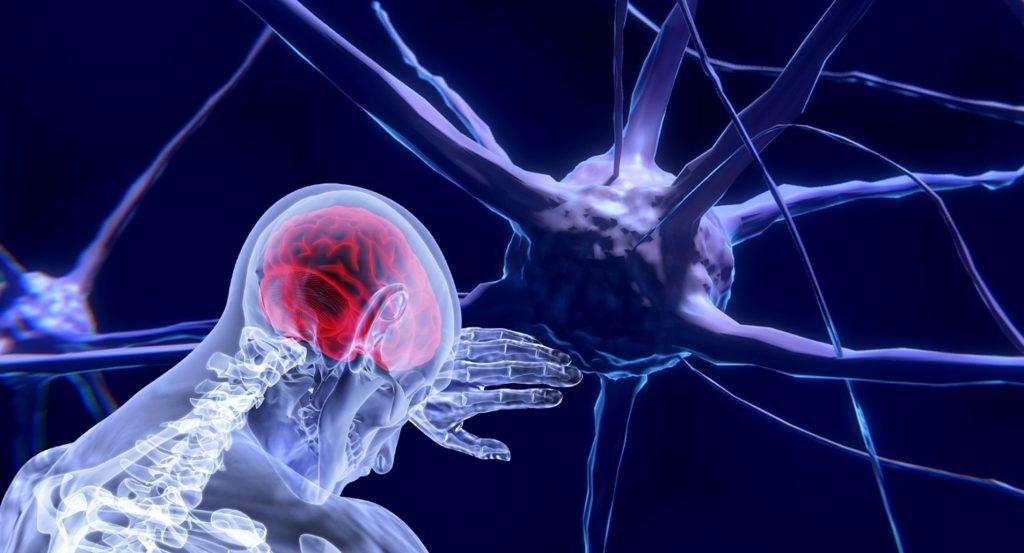 Brain and Science, neuroscience, neutrons